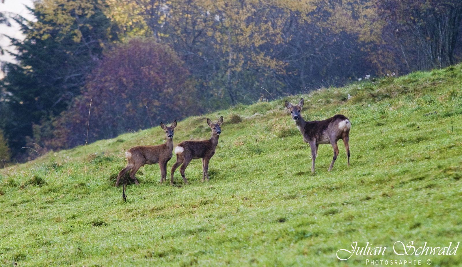 Photograph Deer Family by Julian Schwald on 500px