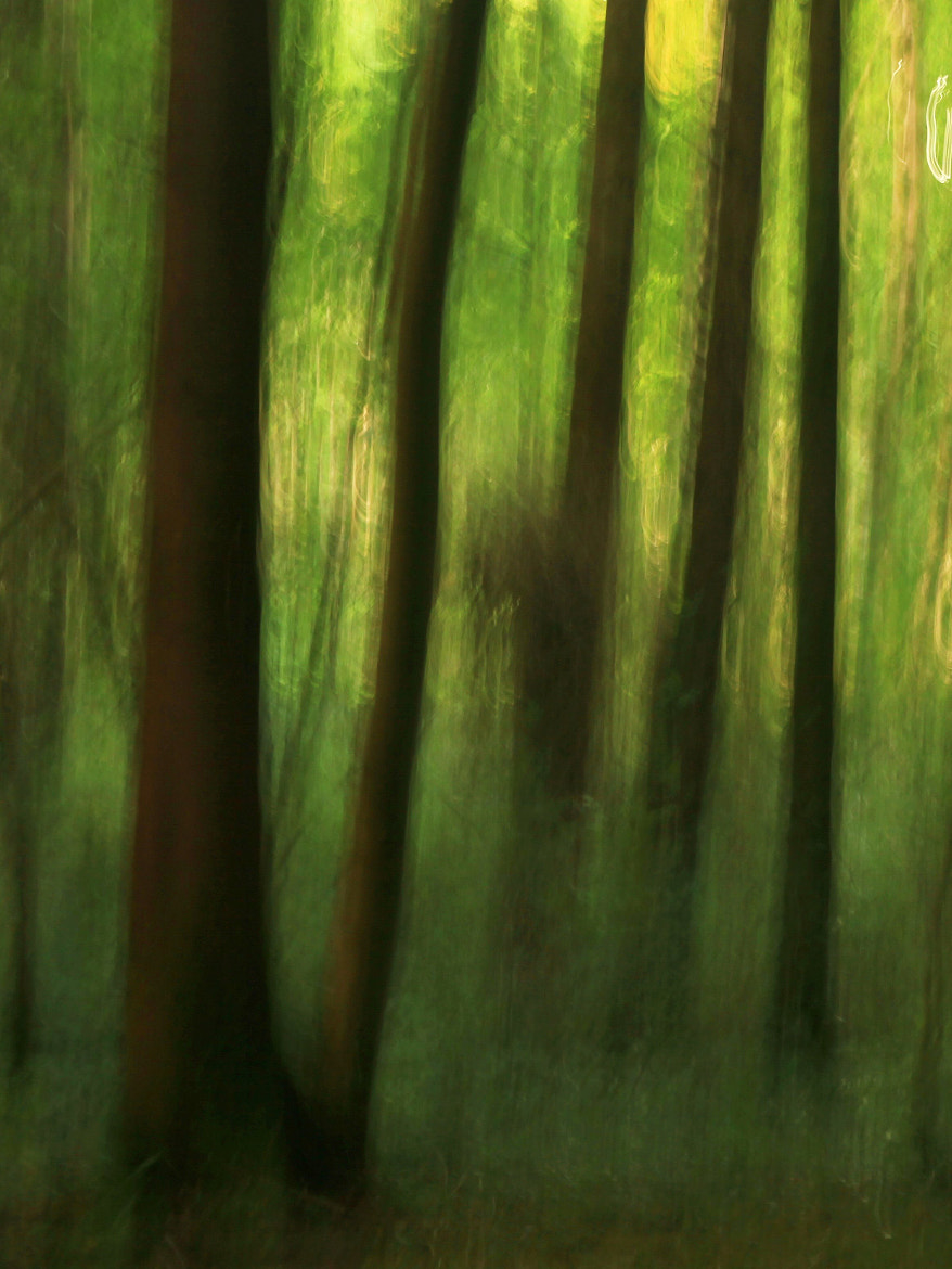 Photograph The enchanted wood. by Edward Dullard on 500px