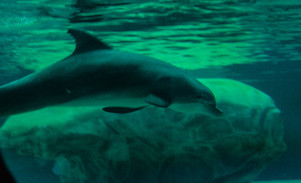 Photograph Dolphin by Tim Evans on 500px