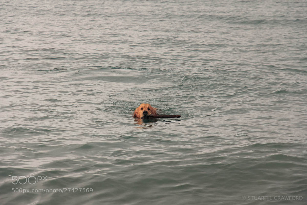 Photograph Swimming Milo by Stuart Crawford on 500px