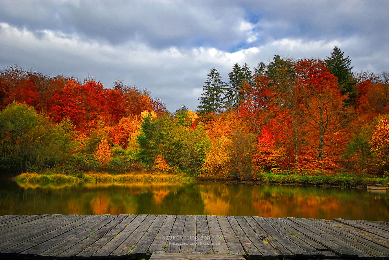 Photograph All colors by Philippe Sainte-Laudy on 500px
