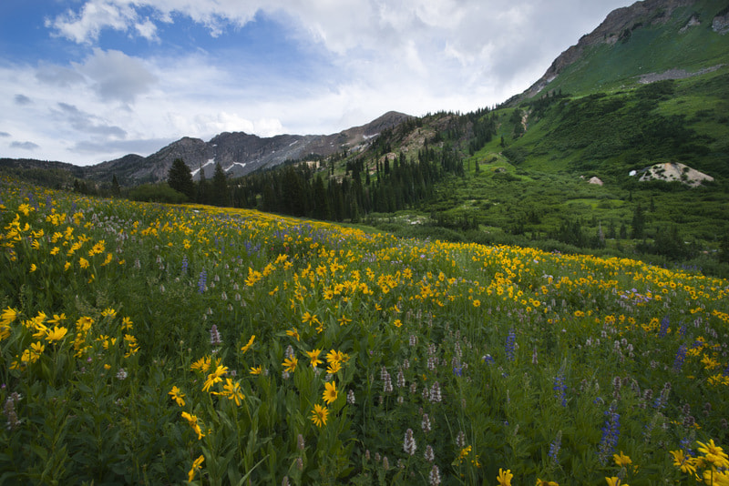 Photograph Albion Basin Wildflowers by Lonnie Shull on 500px