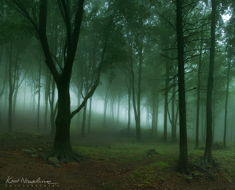 Photograph Mysterious Forest by Karol Nienartowicz on 500px