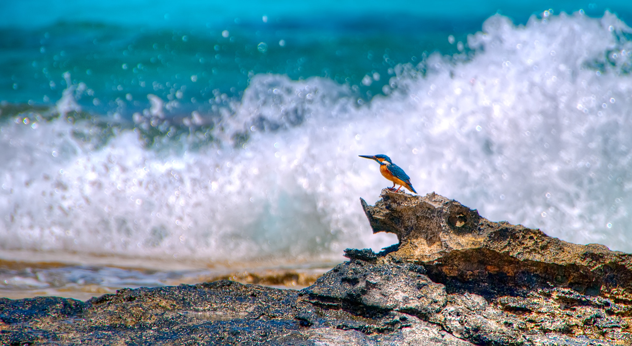 Photograph The Kingfisher by Omar Bariffi on 500px