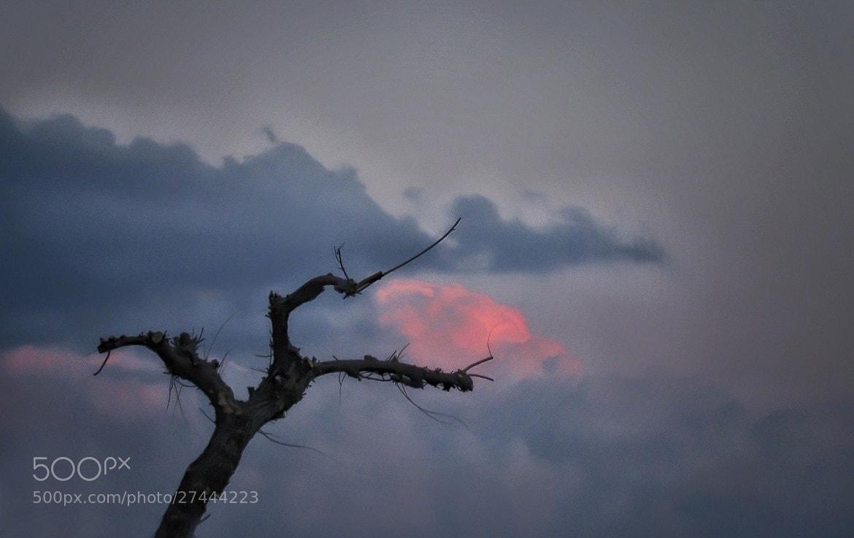 Photograph catch the red by mirela korolija on 500px