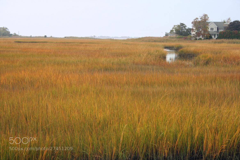 Photograph Cape Cod grasses by Vince Lane on 500px