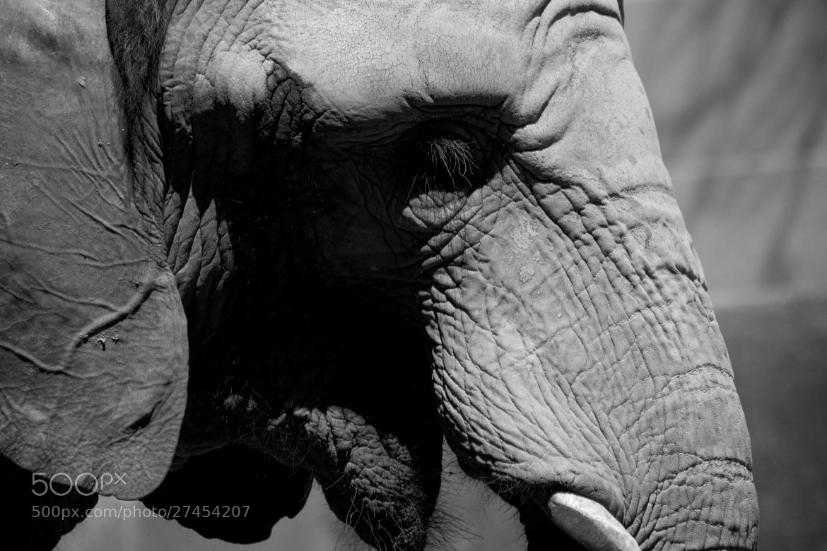 Photograph The sad elephant by Alvaro Renno on 500px
