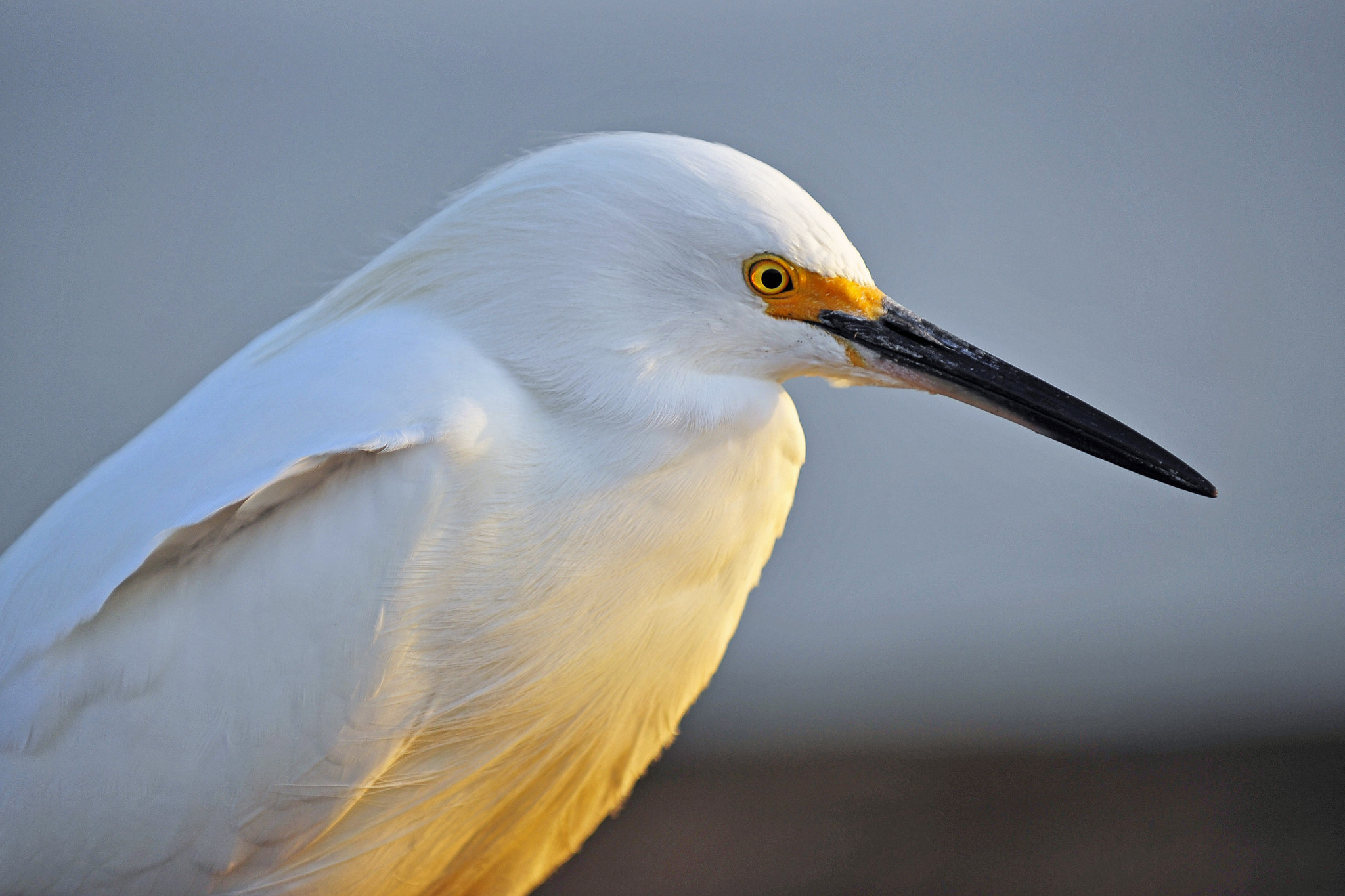 Photograph Egret on the Oceanside Pier - March 4, 2013 by Rich Cruse on 500px
