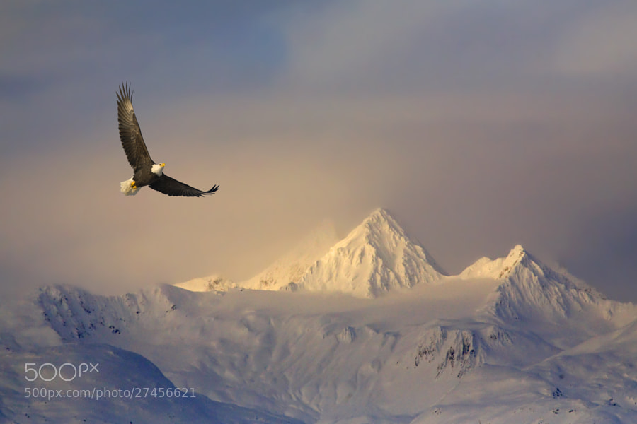 Soaring High by Mark Lissick on 500px.com