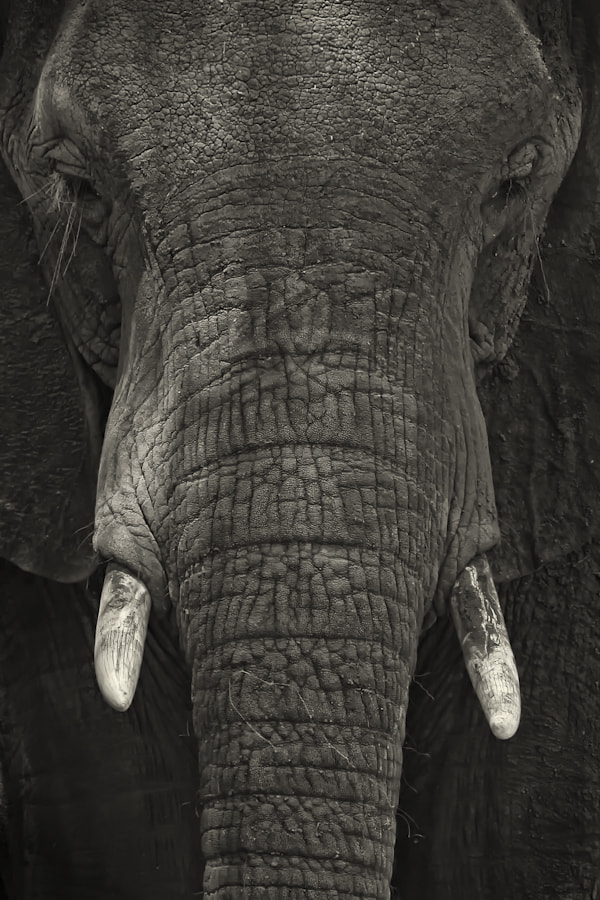 Photograph Young Elephant Portrait by Mario Moreno on 500px