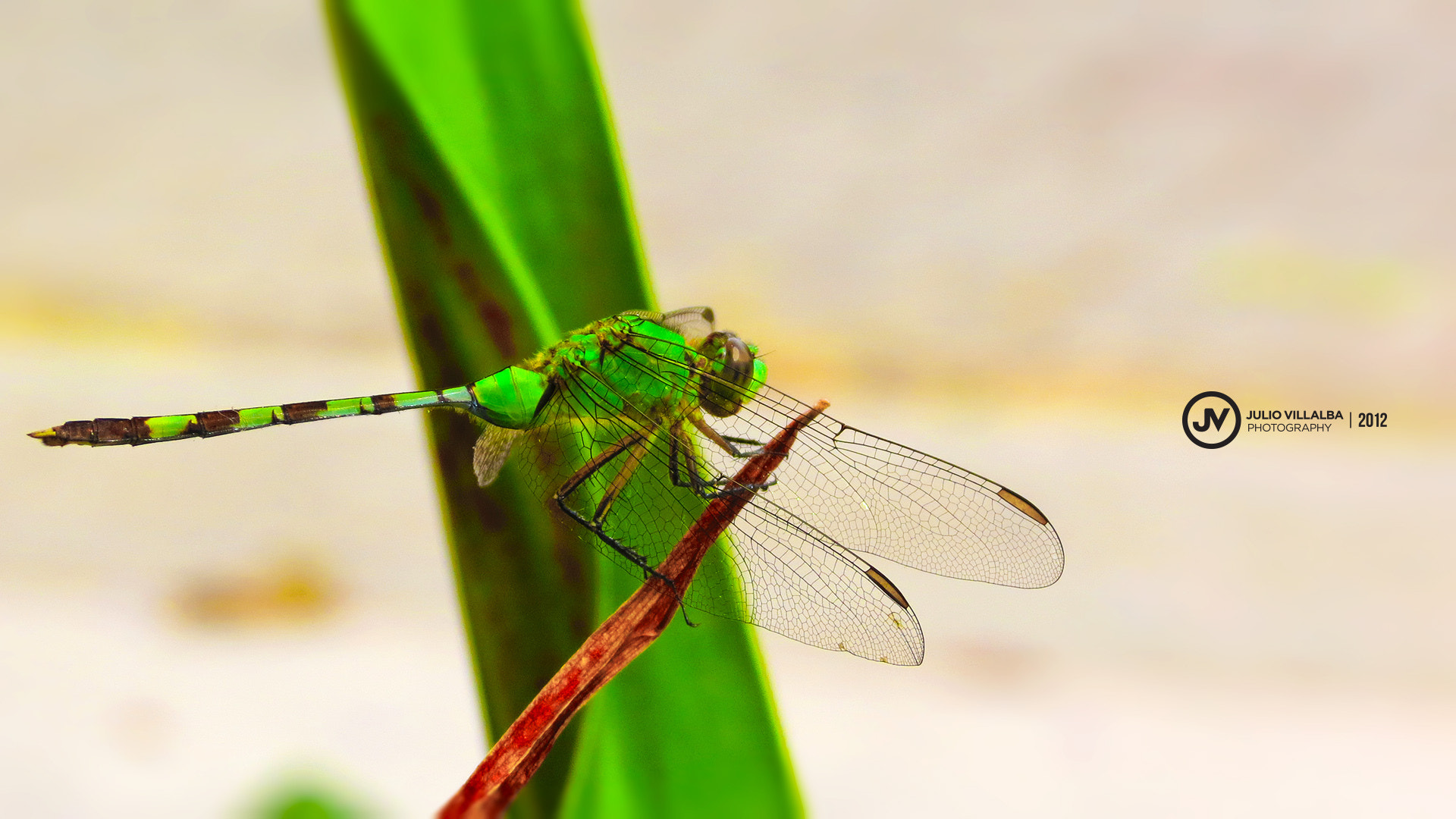 Photograph Green Dragonfly by Julio Villalba M. on 500px
