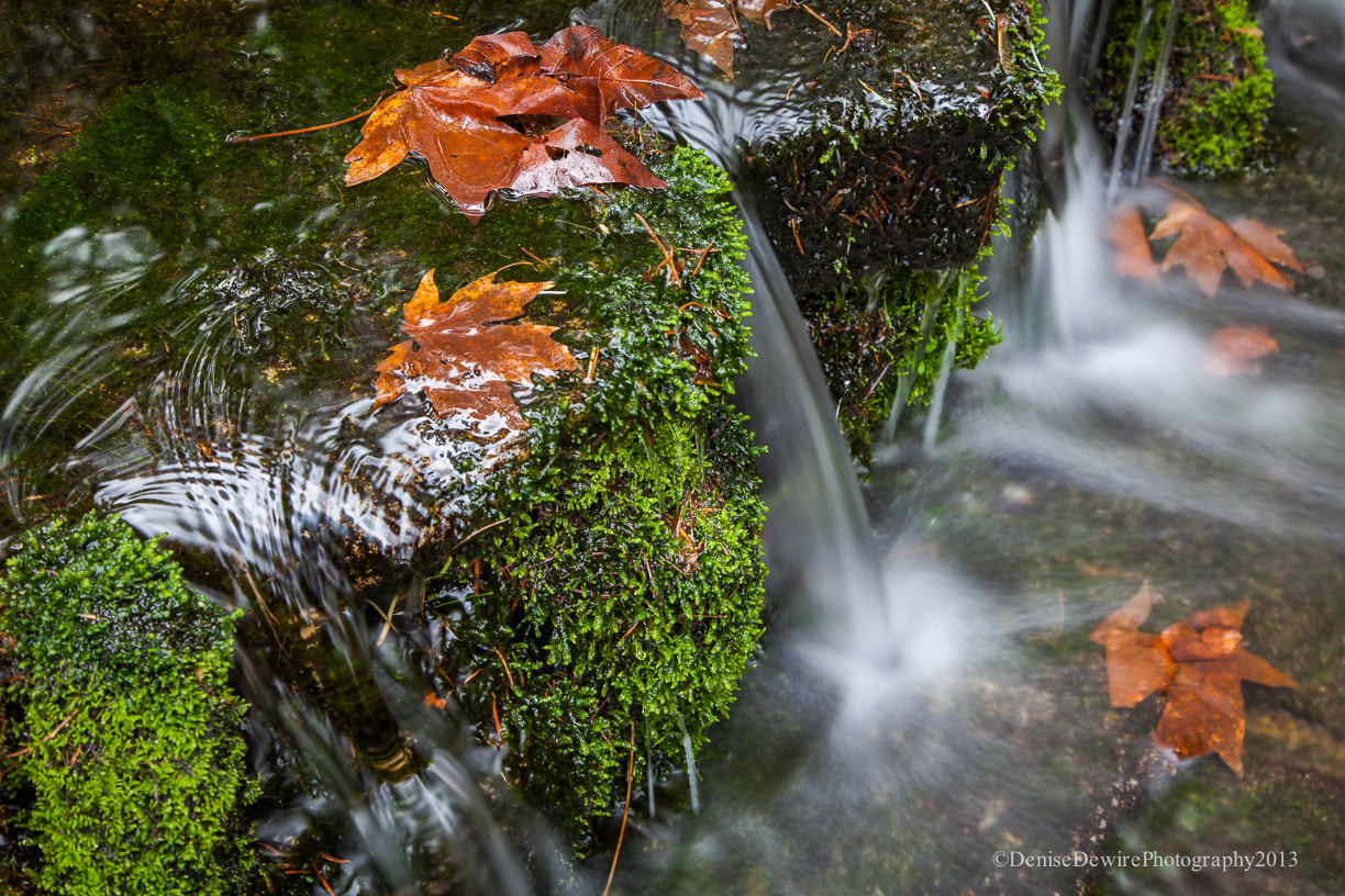 Photograph Trickle at Fern Springs by Denise Dewire on 500px
