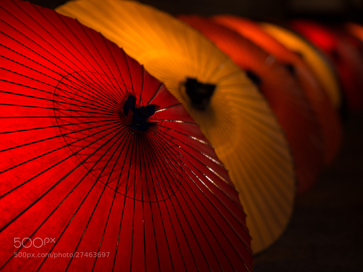 Photograph A Midspring Night's Dream by Kaz Watanabe on 500px