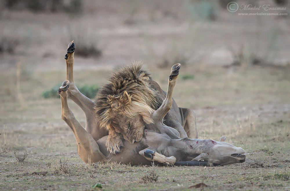 Photograph The Smothering by Morkel Erasmus on 500px