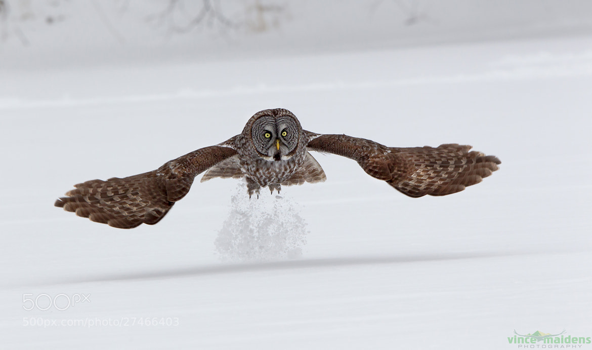 Photograph Takeoff by Vince Maidens on 500px