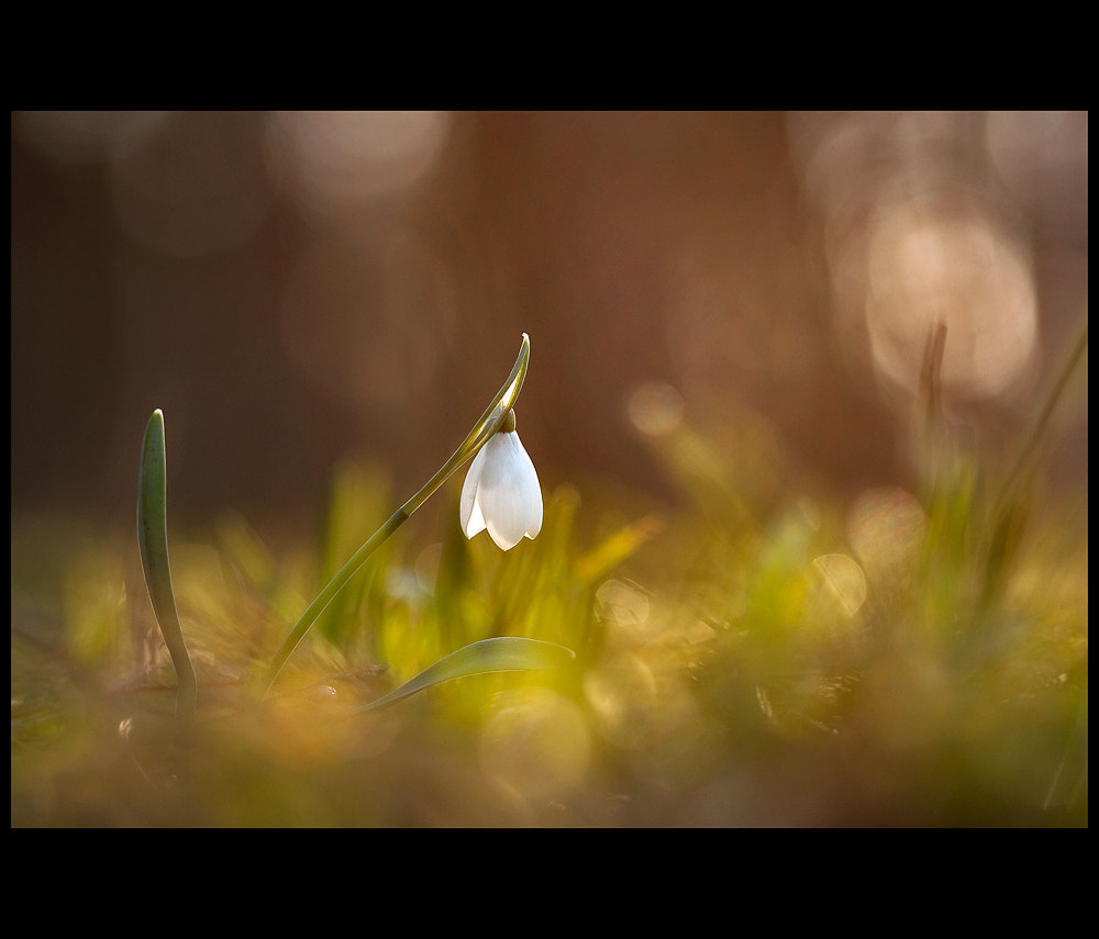 Photograph Promise of spring by Péter Koczkás on 500px