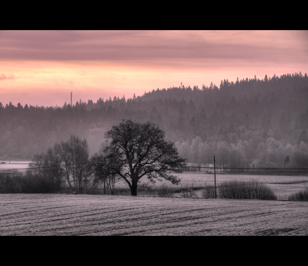 Photograph This morning... by Almqvist Photo on 500px