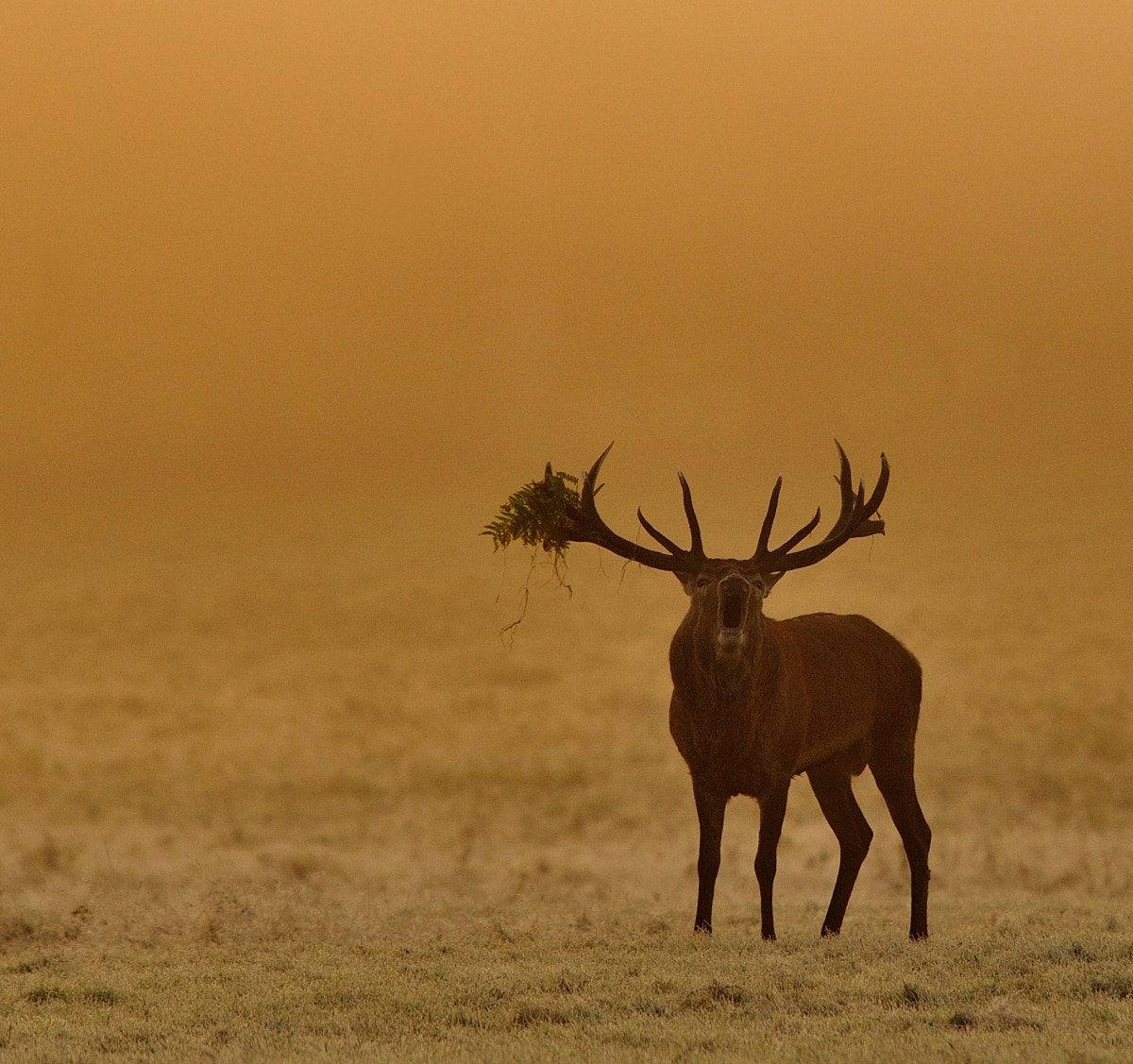 Photograph Red Deer Stag by Andreas Jones on 500px