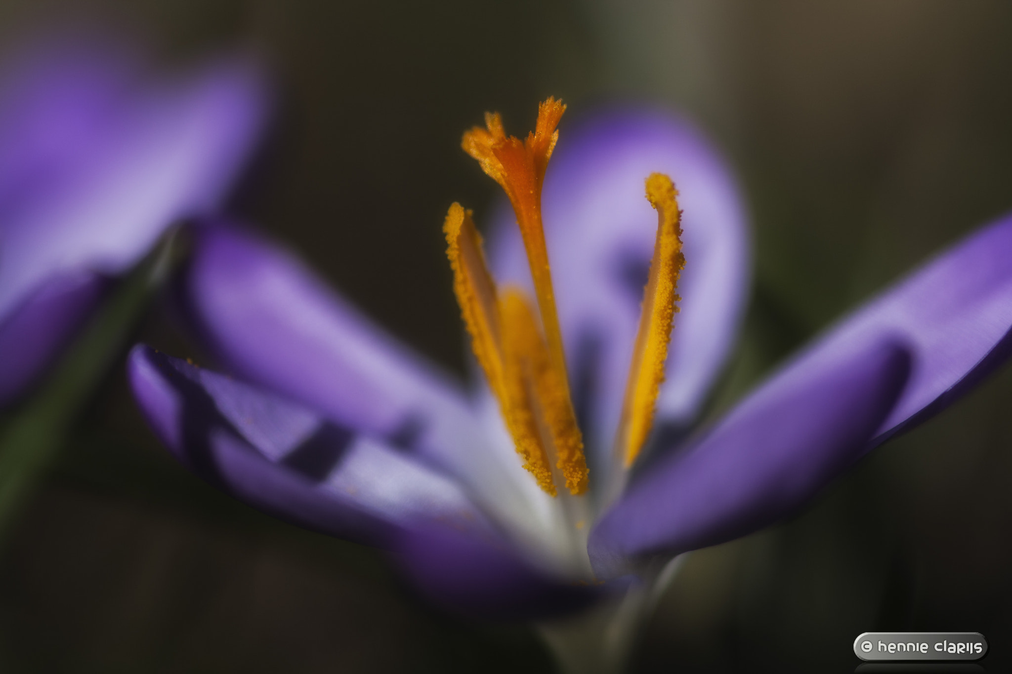 Photograph A Sign of Spring by Hennie Clarijs on 500px