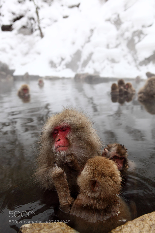 Photograph Snow Monkey by Fan Yang on 500px