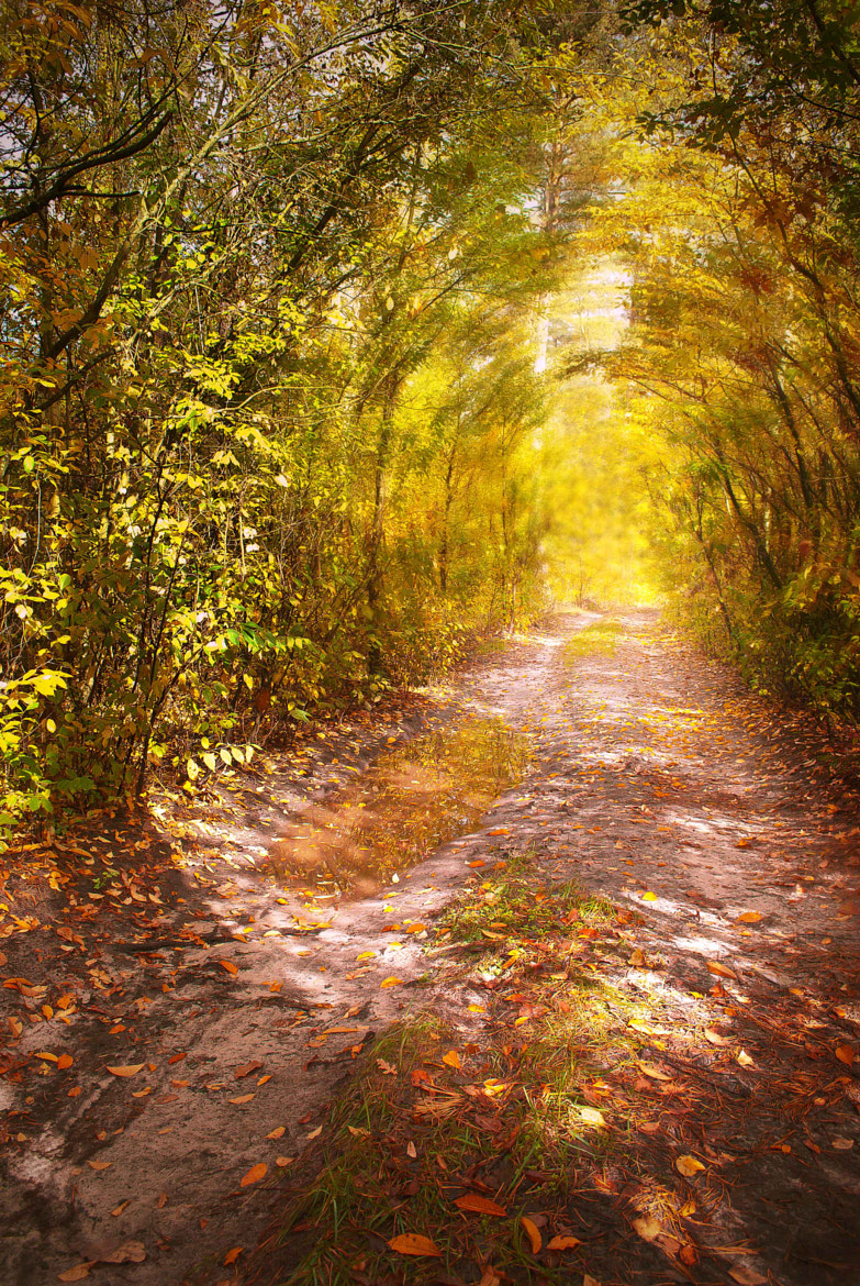 Photograph Autumn road by Inna Petrova on 500px