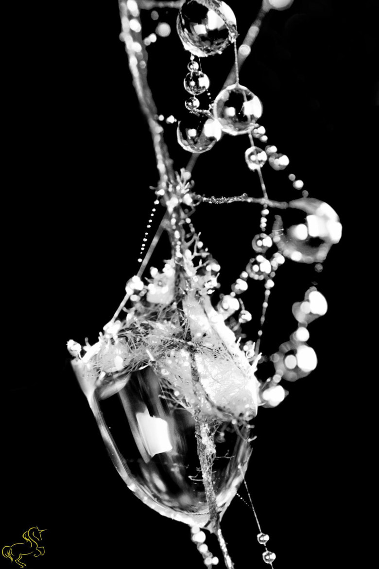 Photograph A cocktail glass with liquid balls by Man Inthe Street on 500px