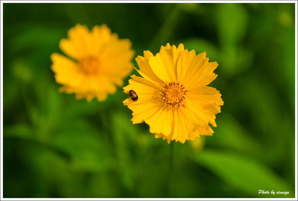 Photograph Flower by Hongbing Ge on 500px