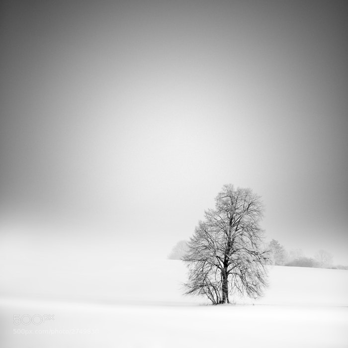 Photograph white land #2 by Maximilian & Christian Baeuchle on 500px