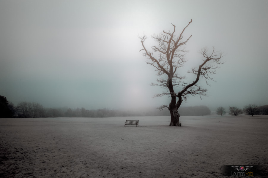 Photograph Tree in Infrared by Sam Bentley on 500px
