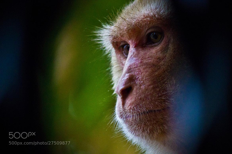 Photograph Peekaboo by Vinay Singh on 500px