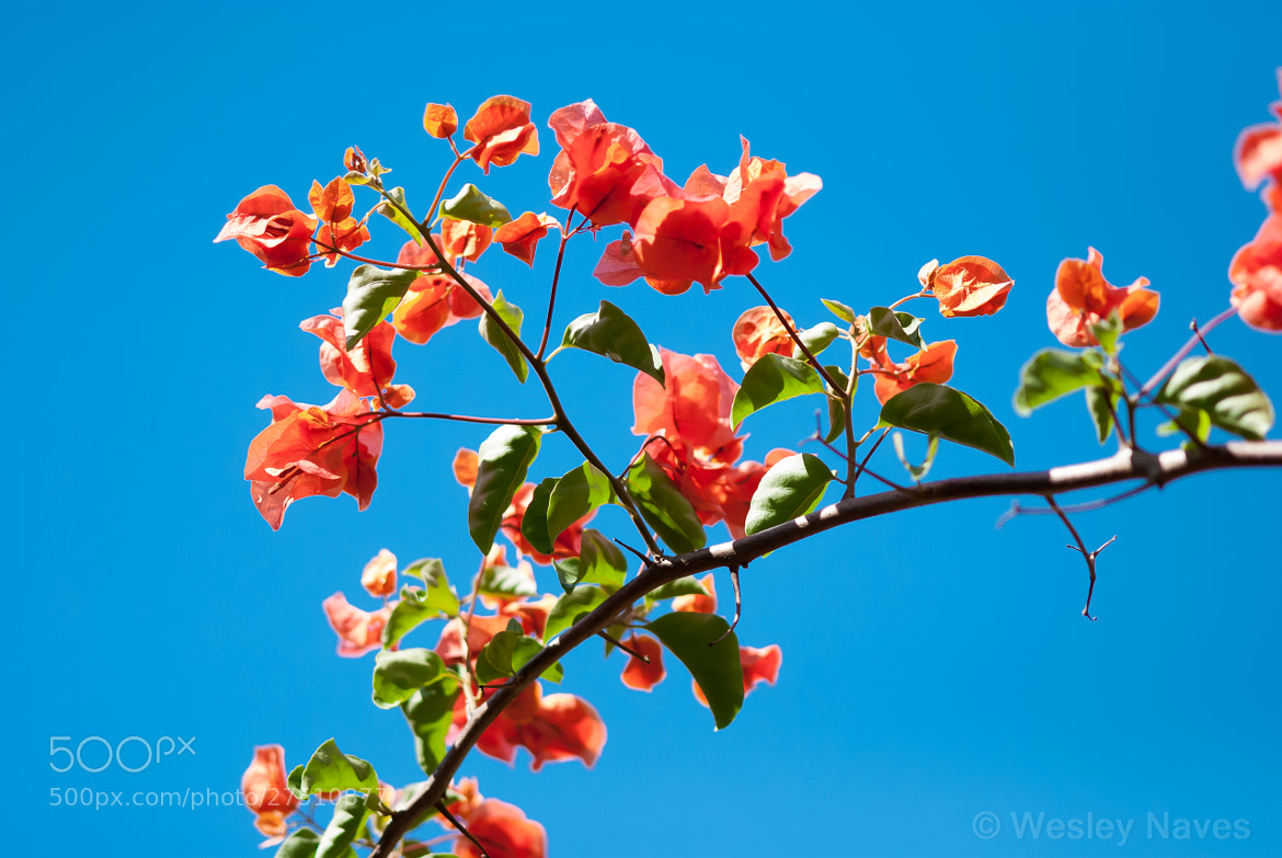 Photograph Red flowers and blue sky by Wesley Naves on 500px