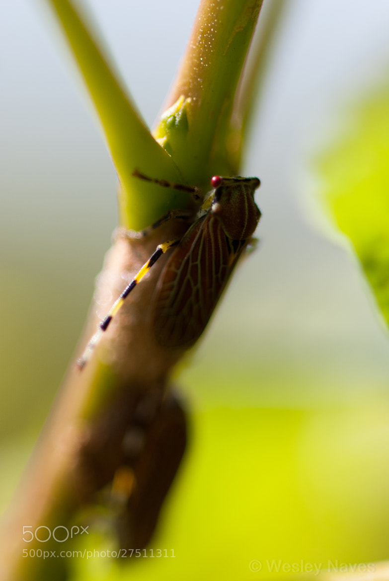 Photograph Insect by Wesley Naves on 500px