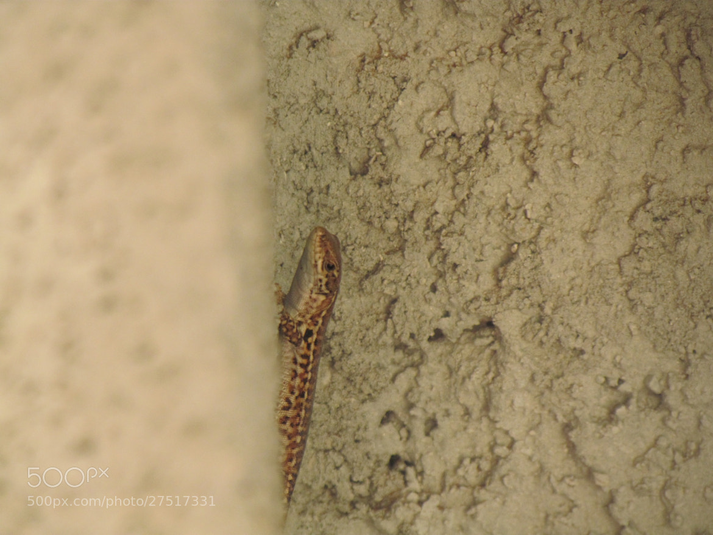 Photograph Shy Lizard by Laura Treglia on 500px