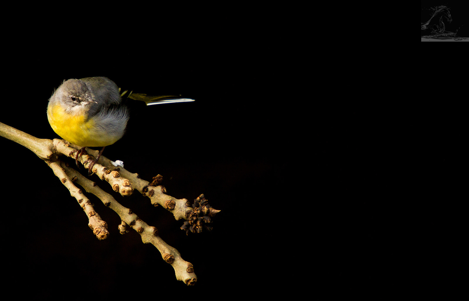 Photograph Grey Wagtail 1 by Kurien Yohannan on 500px
