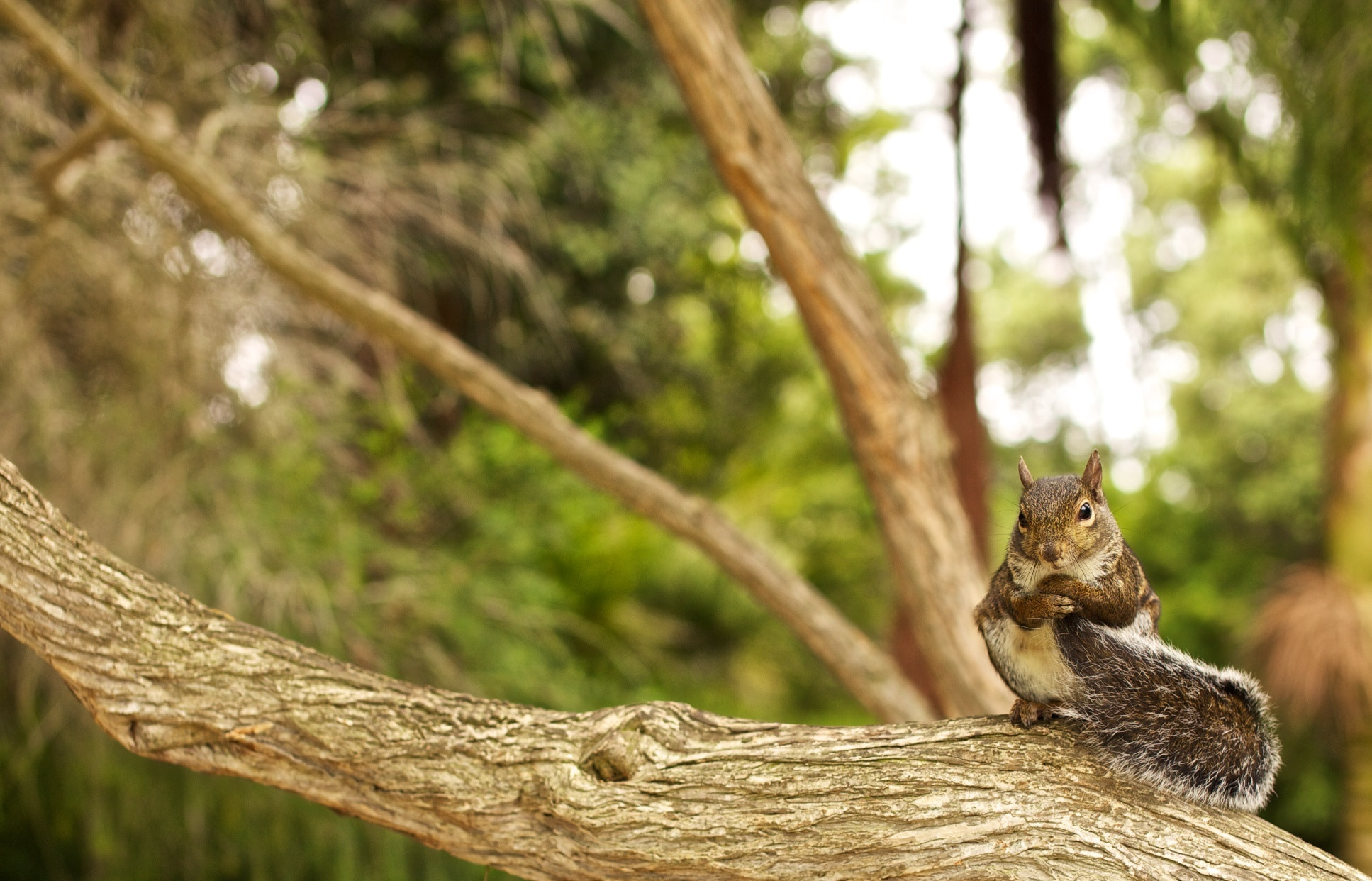 Photograph Cheeky Squirrel by Sean Cheng on 500px
