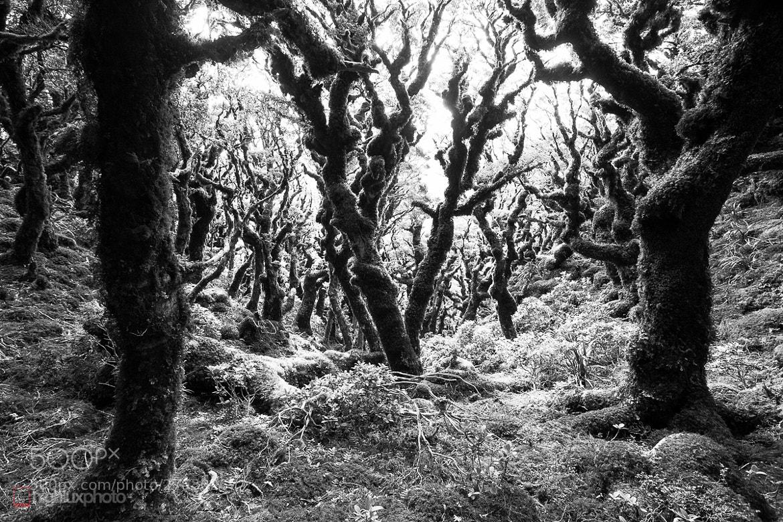 Photograph Beech Forest, Neil Ridge by Mark Watson on 500px