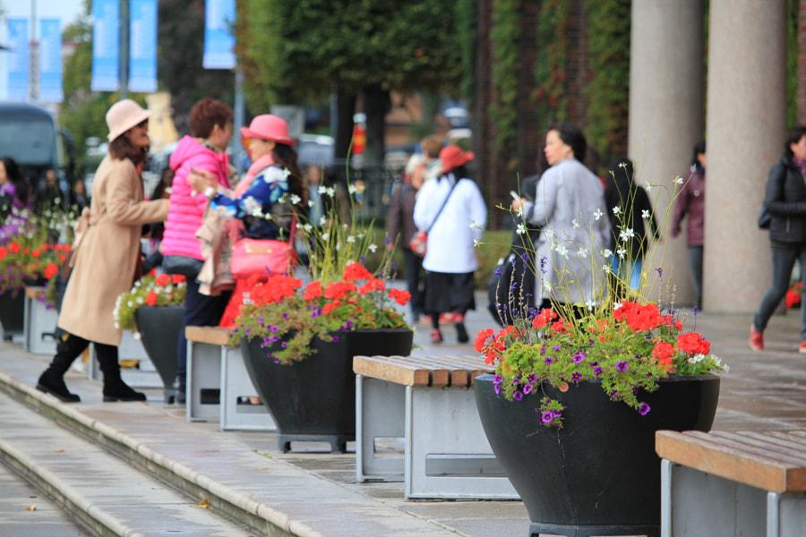 Stockholm at its best by Vivek Juneja on 500px.com