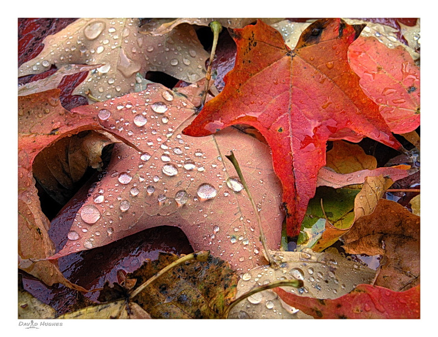 Water Drops & Fall Leaves