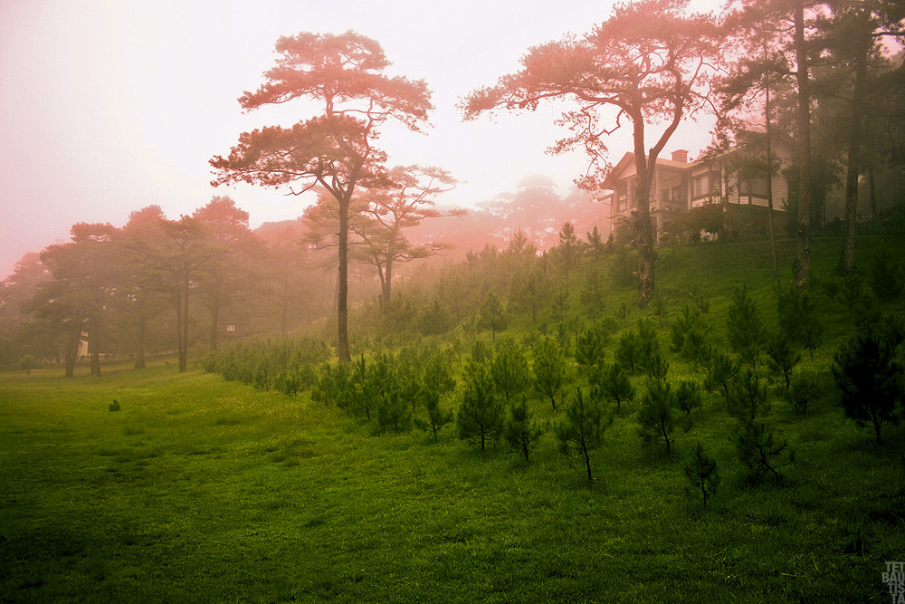Photograph misty baguio by tet bautista on 500px