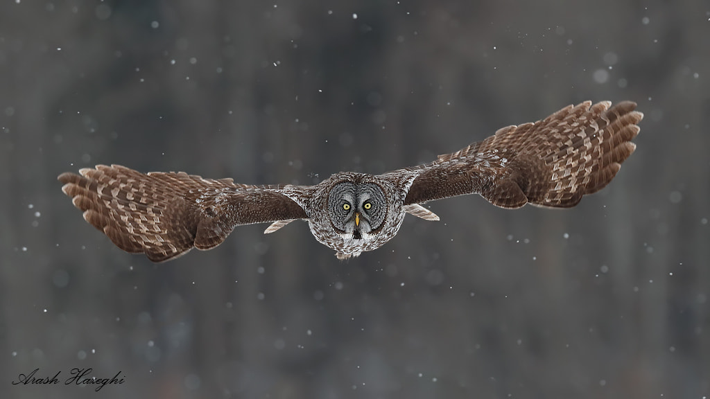 Photograph The silent hunter by Ari Hazeghi on 500px