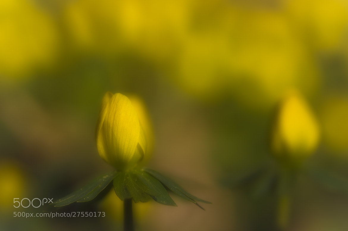 Photograph spring Awakening by Andy 58 on 500px