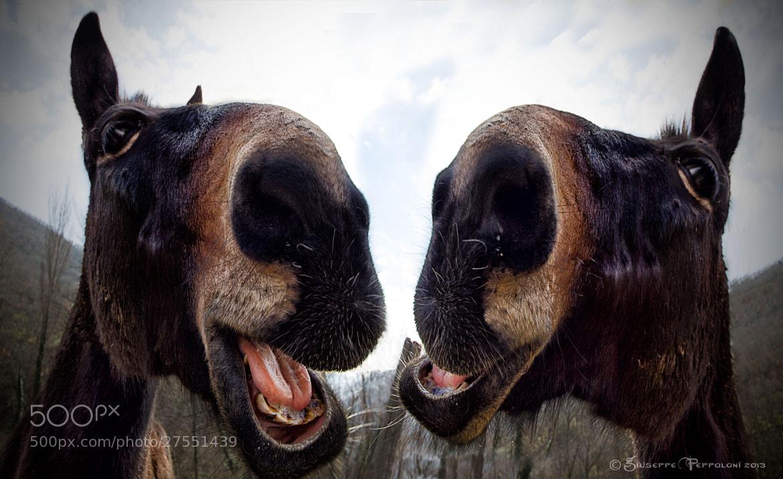 Photograph Hiiiiiii Hoooooo !! Hiiiiiii Hooooooooo ! by Giuseppe  Peppoloni on 500px