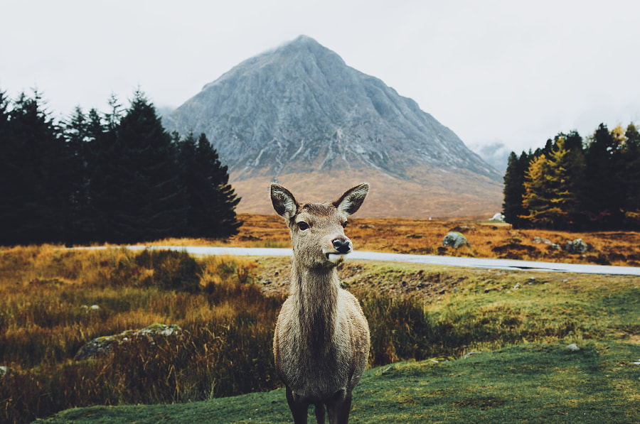 Lady of the Glen by Daniel Casson | 500px.com
