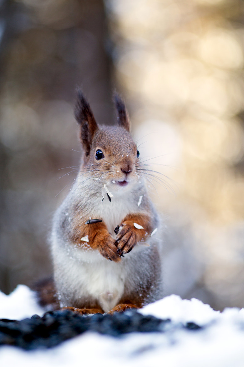 Photograph Lucky Squirrel by Gleb Skrebets on 500px