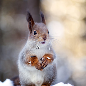 Lucky Squirrel by Gleb Skrebets (shixaro)) on 500px.com