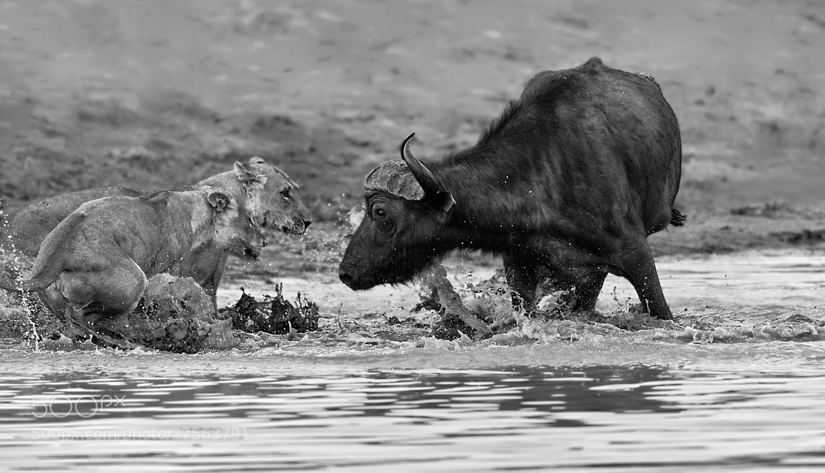 Photograph Relentless enemies. by Marc MOL on 500px