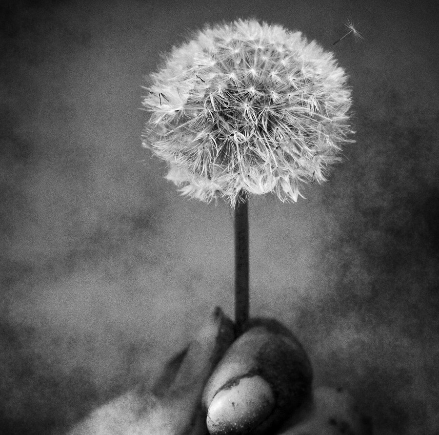 Photograph Blow Away... by Sabrina de Vries on 500px