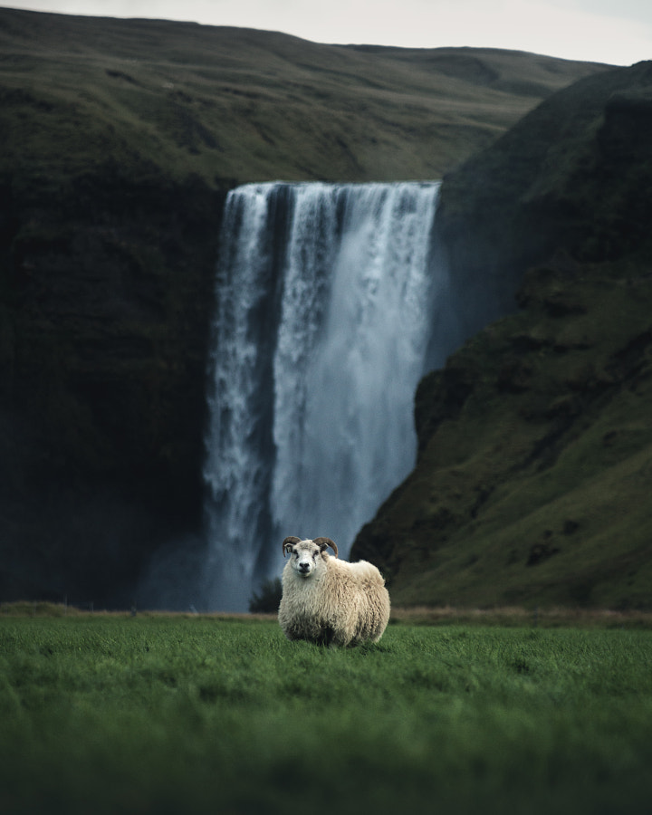 Icelandic portrait by Boris Barabas on 500px.com