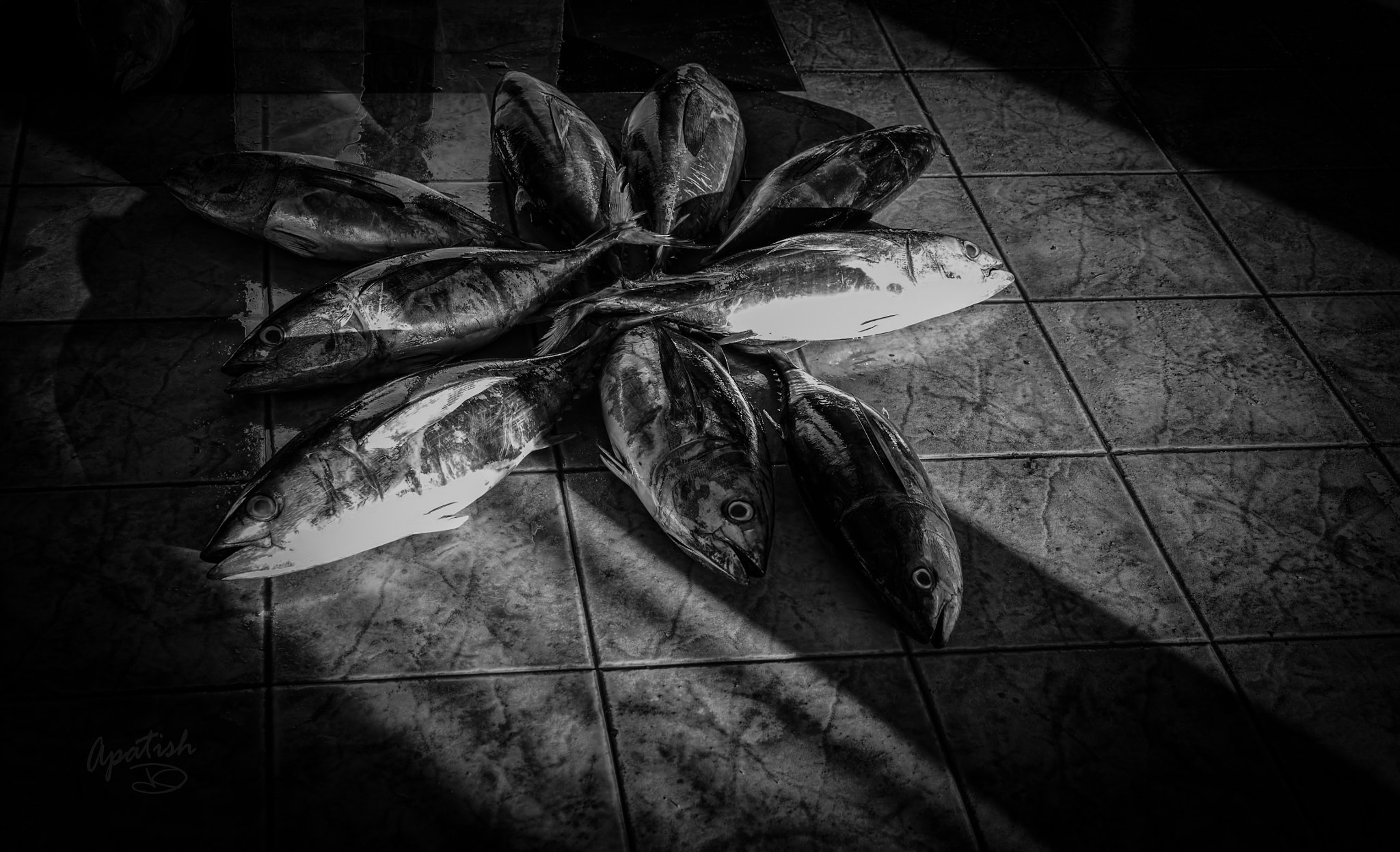 Photograph Starfish by Ariel Patish on 500px