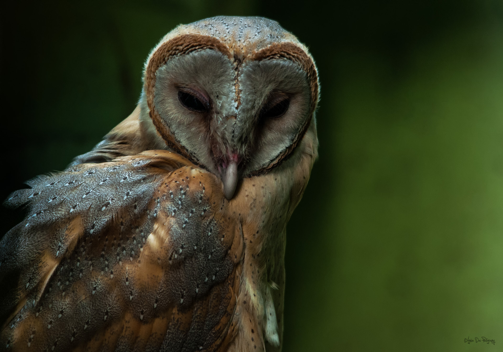 Photograph Cold Stare by Agniva Das on 500px